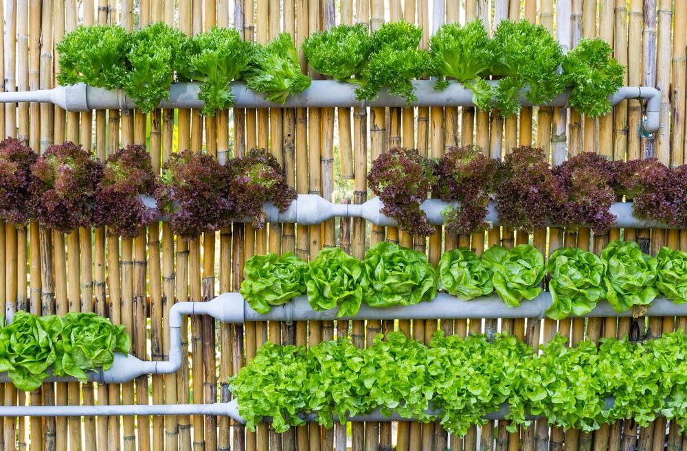 4 dicas para montar uma horta vertical em casa