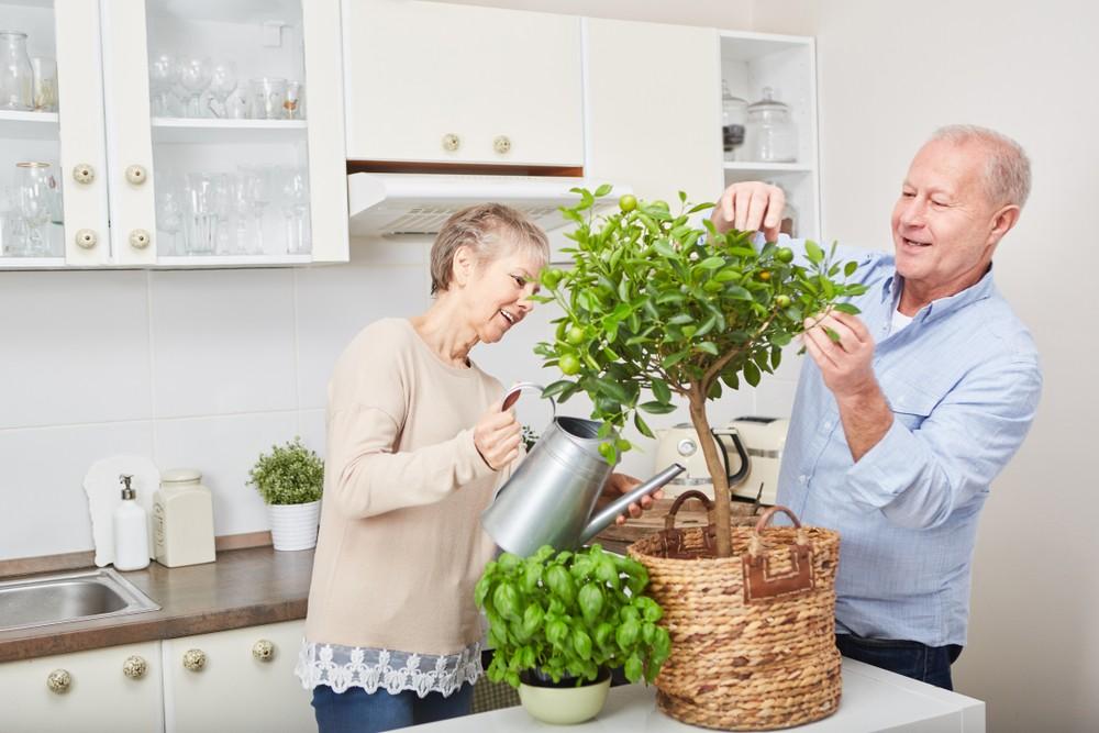 Árvores frutíferas em vasos: veja 4 dicas práticas para o plantio