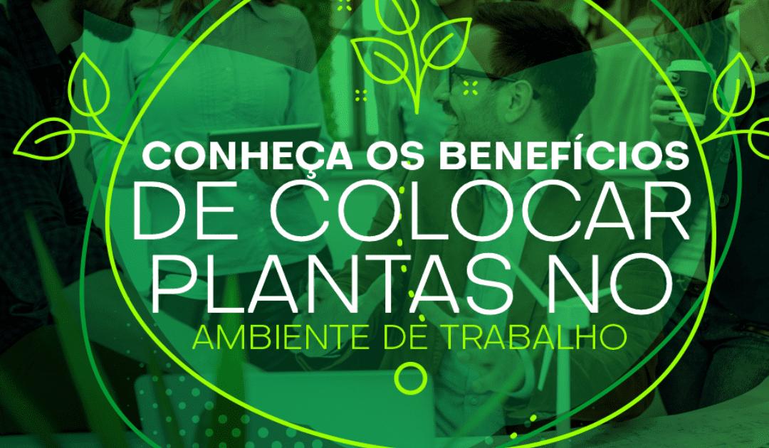Plantas No Ambiente De Trabalho: Conheça os Benefícios