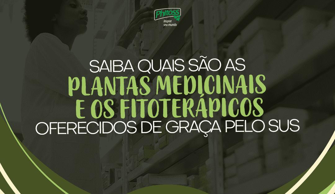 Saiba quais são as plantas medicinais e os fitoterápicos oferecidos de graça pelo SUS