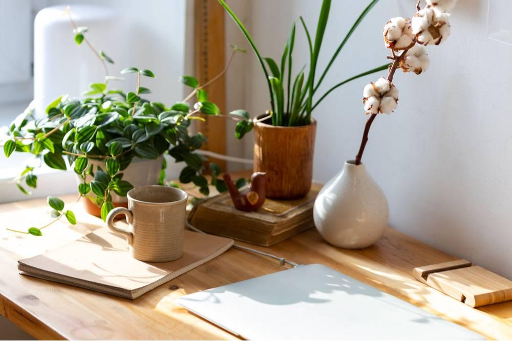 plantas na mesa de escritório